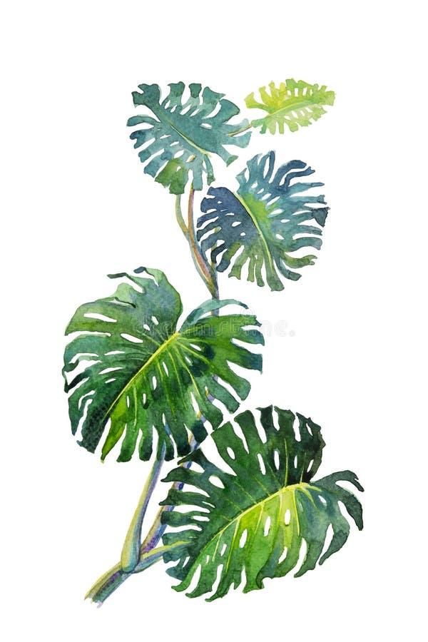 Trendy Summer Tropical Leaves of monstera royalty-vrije stock fotografie