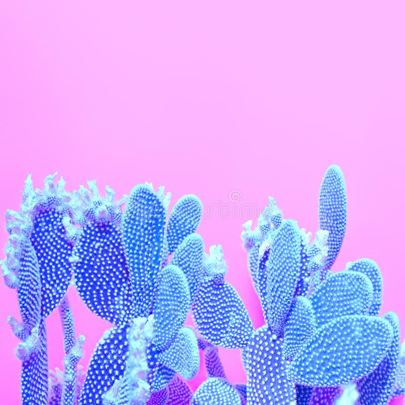 Cactus plant on Pink. Minimal. Concept Art Style. Trendy tropical Cactus plant on Blue Pink background. Minimal Art Concept. Creative Style royalty free stock image
