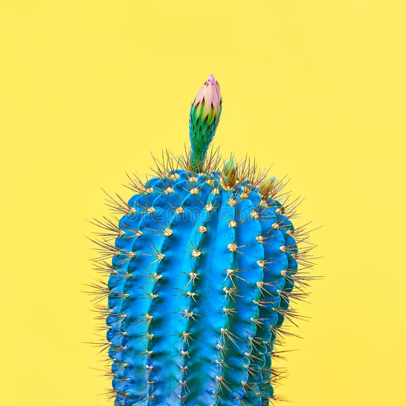 Cactus plant on Blue. Minimal. Concept Art Style. Trendy tropical Cactus plant on Yellow Color background. Minimal Art Concept. Creative Style royalty free stock photography