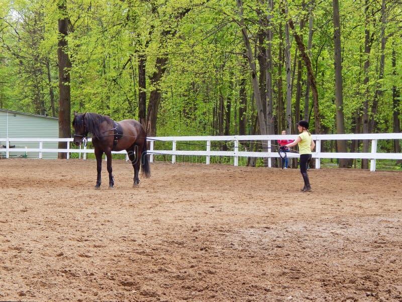 Trener trenuje konia blisko stajenek w parkowym Ostankino w Moskwa w Maju, 2016 zdjęcia stock