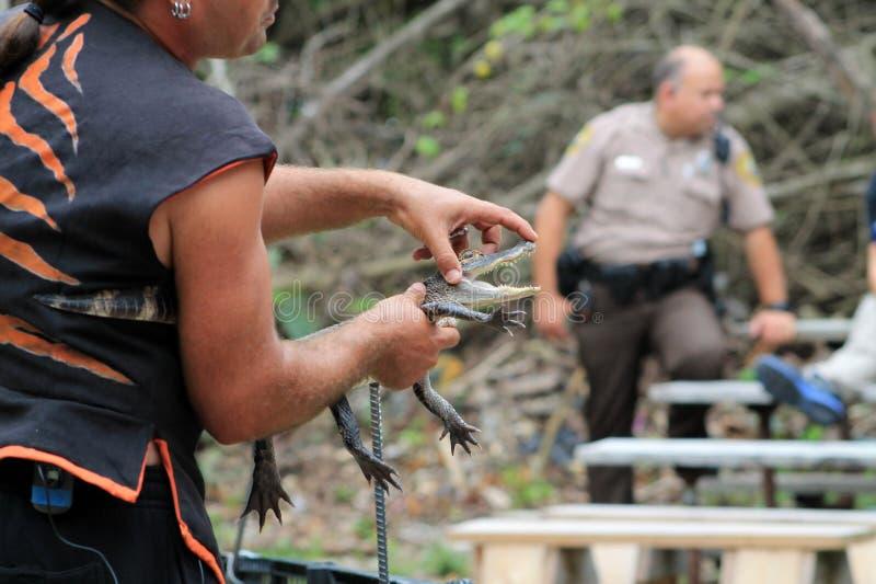 Trenera mienia dziecka aligator zdjęcia royalty free