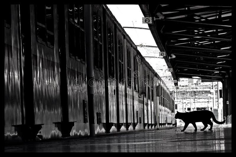 treno in bianco e nero del gatto fotografia stock libera da diritti
