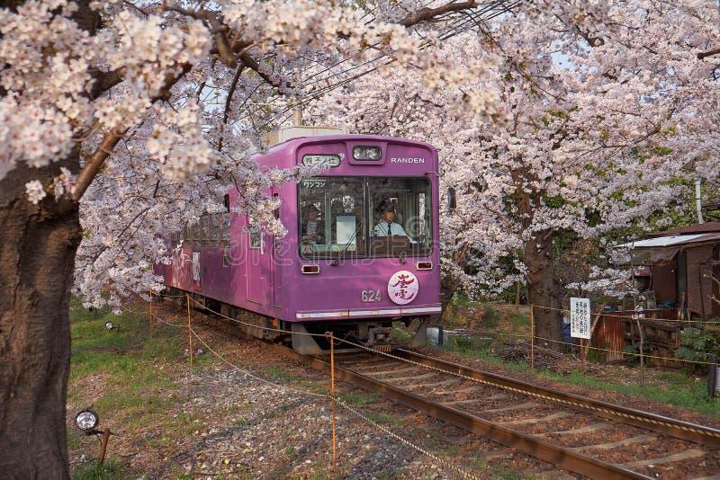 Treno della ciliegia a Kyoto fotografia stock