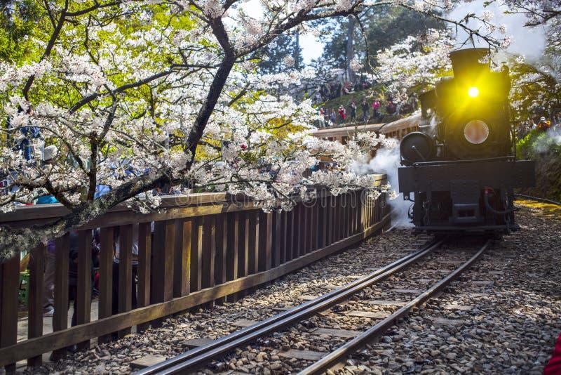 Treno della foresta di Alishan immagine stock libera da diritti