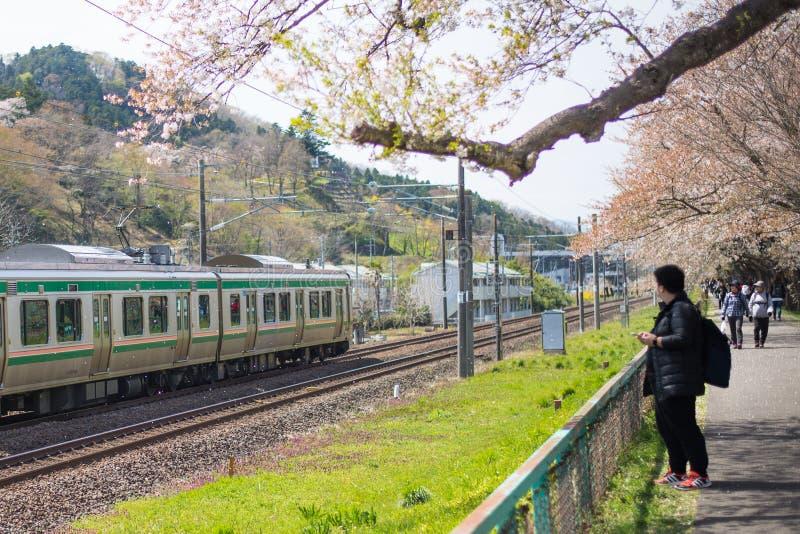 Treno facente un giro turistico di Sakura fotografie stock libere da diritti