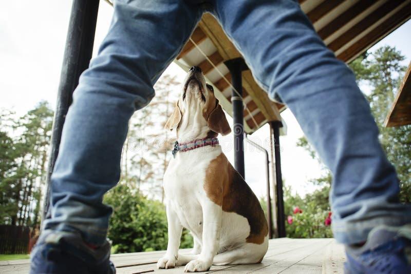Trens da criança um cão foto de stock royalty free