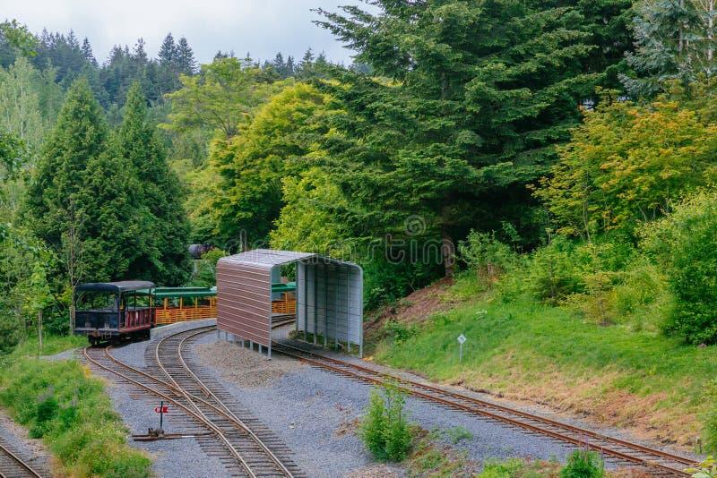 Trens e trilhas entre árvores em Washington Park, Portalnd, EUA fotografia de stock