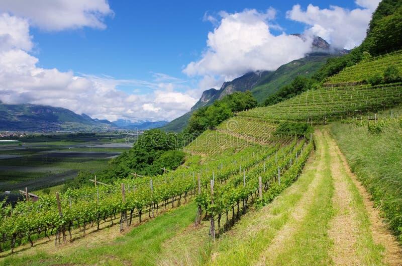 Trentino fotos de stock royalty free
