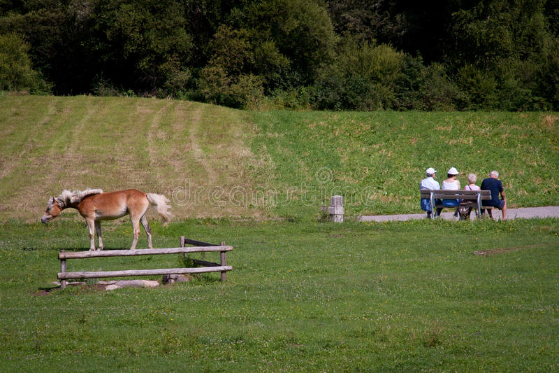 Trentino Alto Adige, Itália, estrada Val di Fiemme e Fassa da bicicleta imagem de stock royalty free