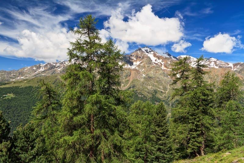 Trentino - hoge Pejo-vallei stock foto