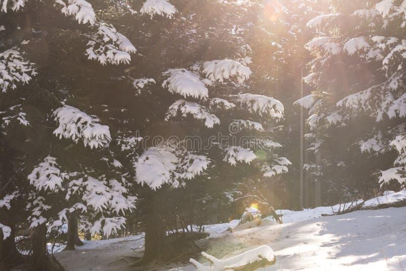 Trentino houten wit van de sneeuwwinter en verticaal royalty-vrije stock foto's