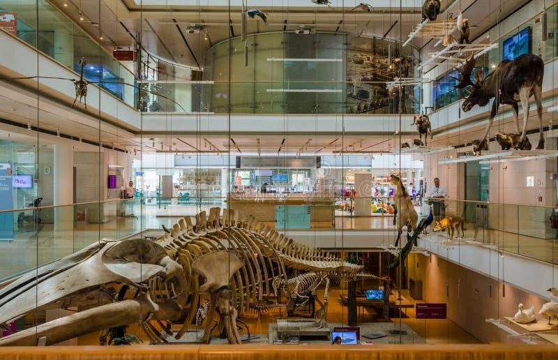 TRENTO, Włochy, Czerwiec 2017: Wnętrze sławny muzeum nauki Trento w Trentino alcie Adige Muzeum, denomina zdjęcie royalty free
