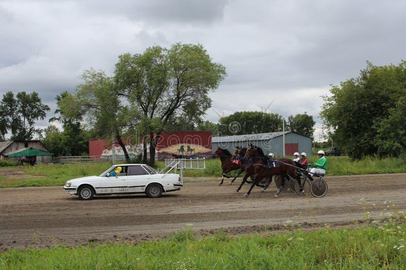 Trenujący Novosibirsk przy dzielnicowym biegowego śladu mistrzem 2017 sezonów rasa kłusaków konie zdjęcia royalty free