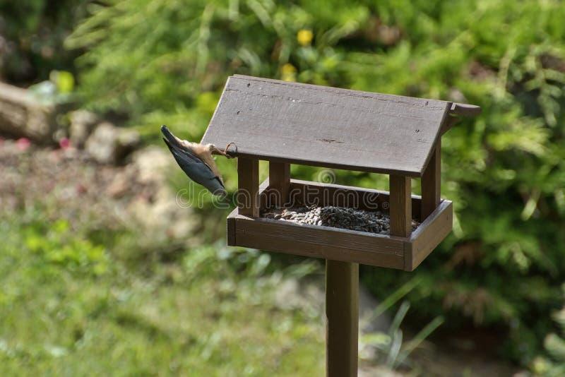 Trepatroncos en los alimentadores del pájaro fotos de archivo libres de regalías