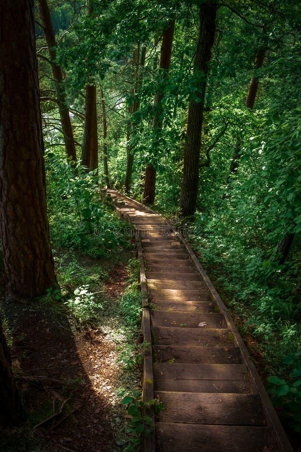Treppe, die unten das Holz durchläuft stockfoto