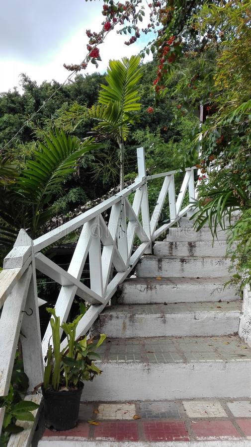 Treppe in einem exotischen Wald stockbild