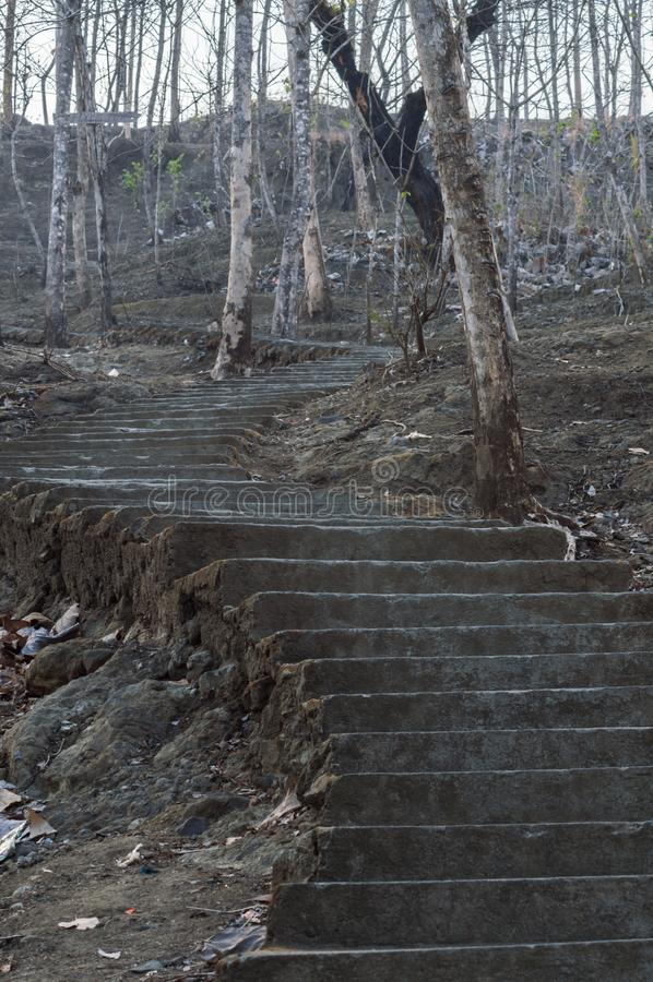Treppe im gruseligen Wald lizenzfreie stockfotografie