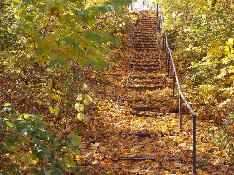 Treppe im Herbst stockbilder