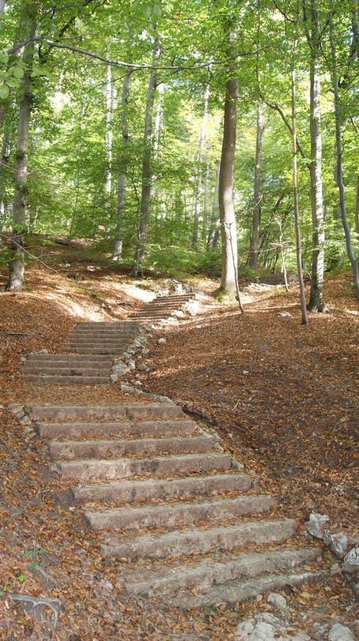 Treppe im Wald lizenzfreie stockbilder