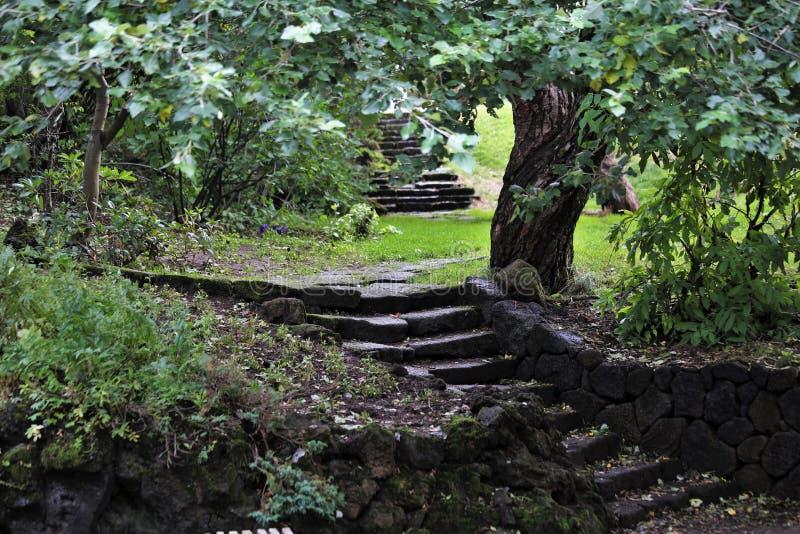 Treppe mit Laub und einem einzigartigen verdrehten Baum in Hellisgerdi-Park in Hafnarfjordur, Island stockfotografie