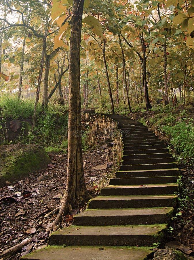 Treppenhaus, das zu die Bäume in der Herbstsaison führt stockbild