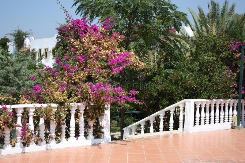 Treppenhaus im Garten stockbilder