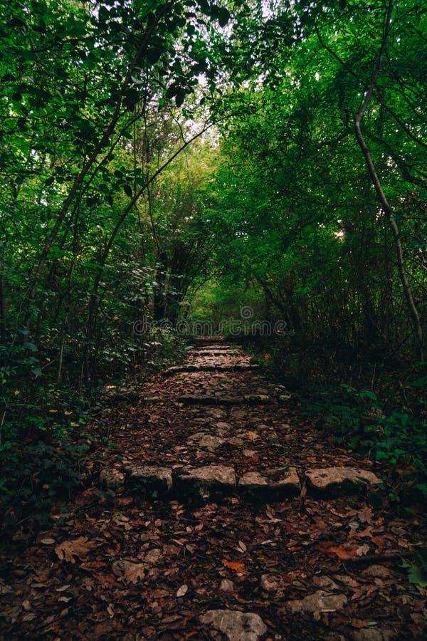 Treppenhaus zum Wald stockbilder