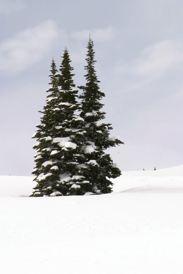 Tres árboles Nevado fotografía de archivo