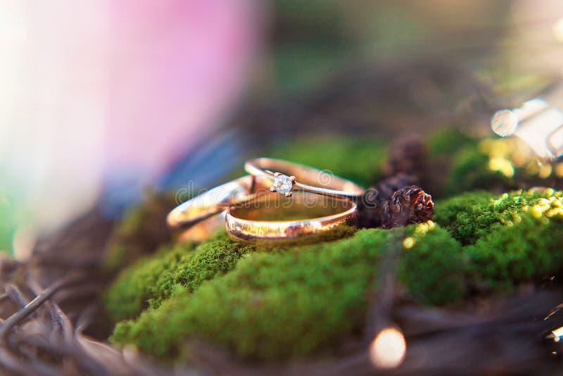 Tres anillos de bodas de oro en el fondo del musgo imagen de archivo