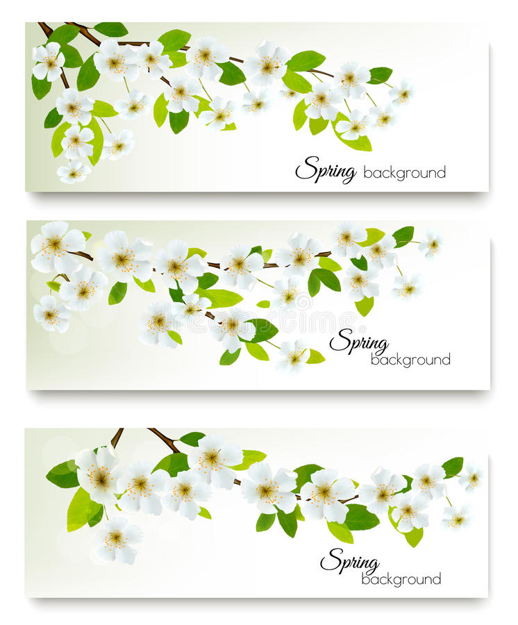 Tres banderas de la naturaleza de la primavera con el flor de la cereza stock de ilustración