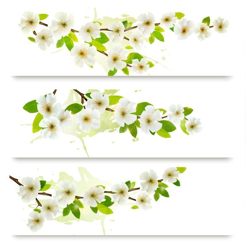 Tres banderas de la primavera con brunch floreciente del árbol ilustración del vector