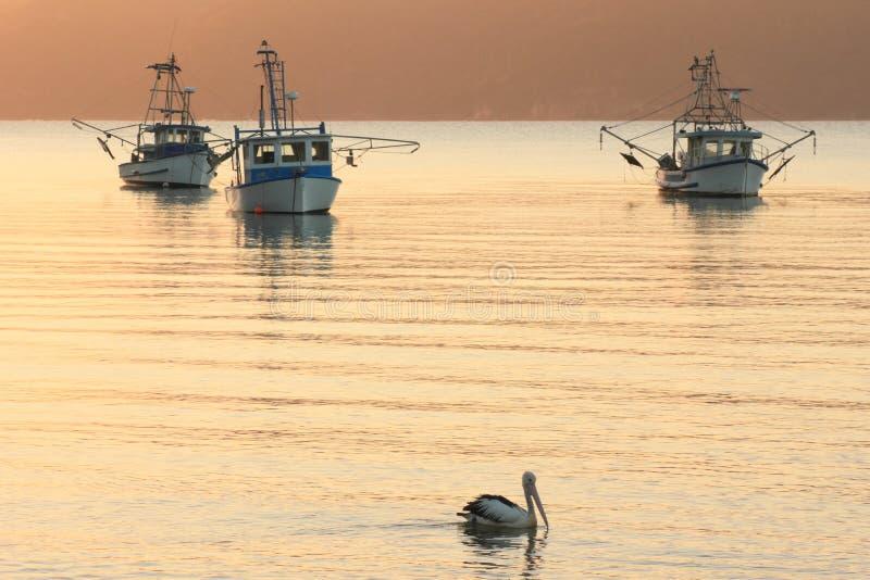 Tres barcos de pesca, un pelícano en el amanecer imagen de archivo