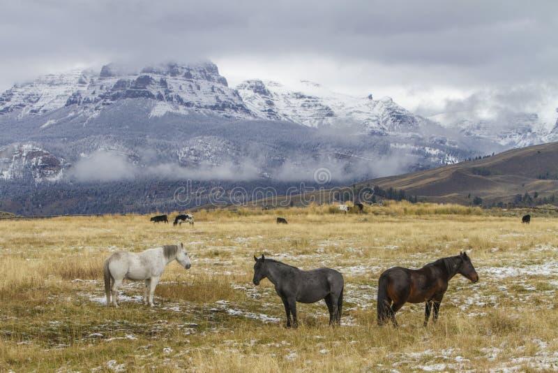Tres caballos en pasto del rancho de Wyoming imágenes de archivo libres de regalías