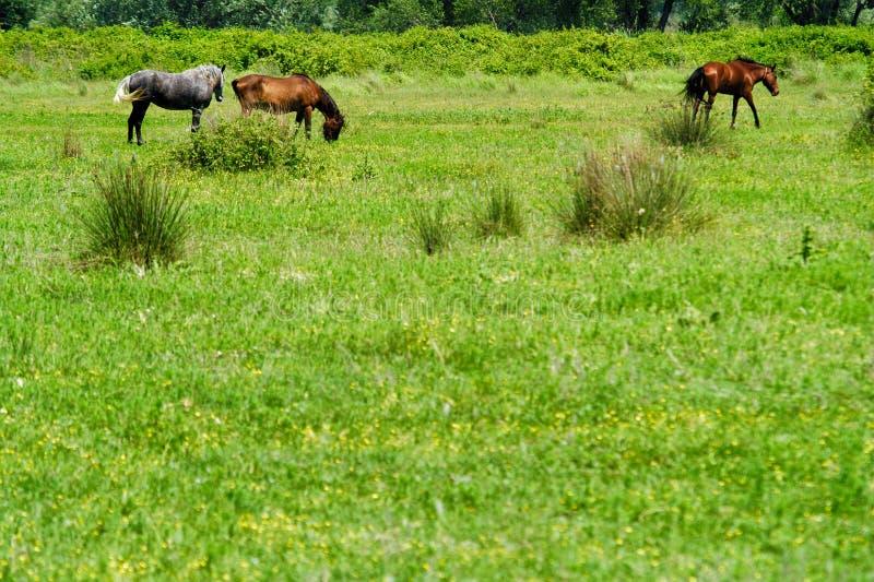 Tres caballos en un valle imagenes de archivo