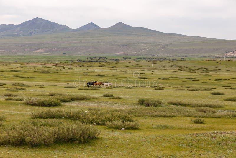 Tres caballos multicolores funcionados con a través de la estepa fotografía de archivo