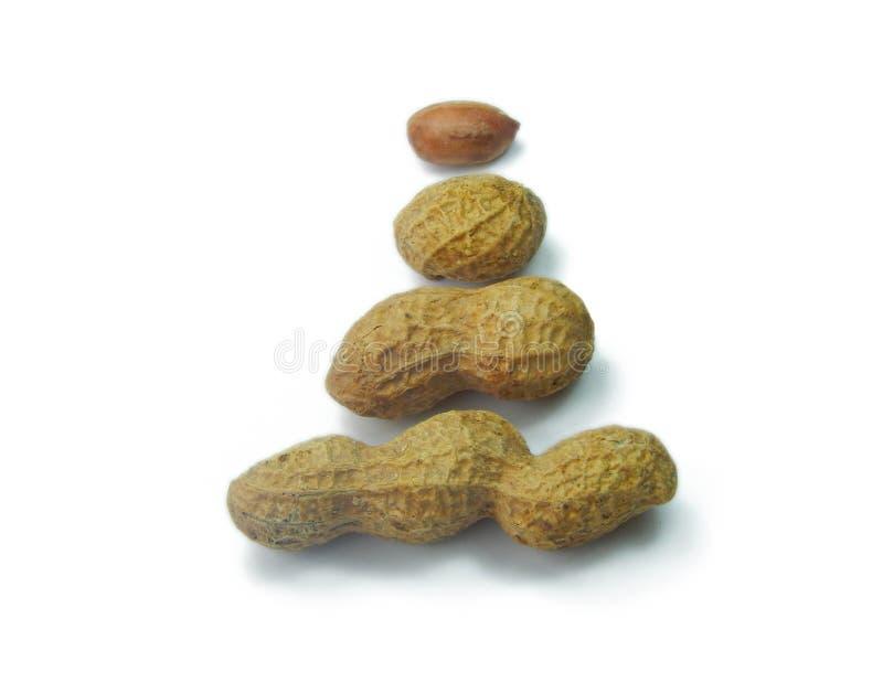 Tres cacahuetes en cáscara con una base en fila en el fondo blanco fotografía de archivo