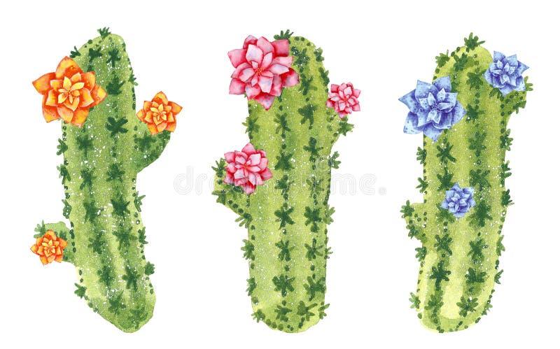 Tres cactus verdes que florecen con las flores del rosa, anaranjadas y azules stock de ilustración