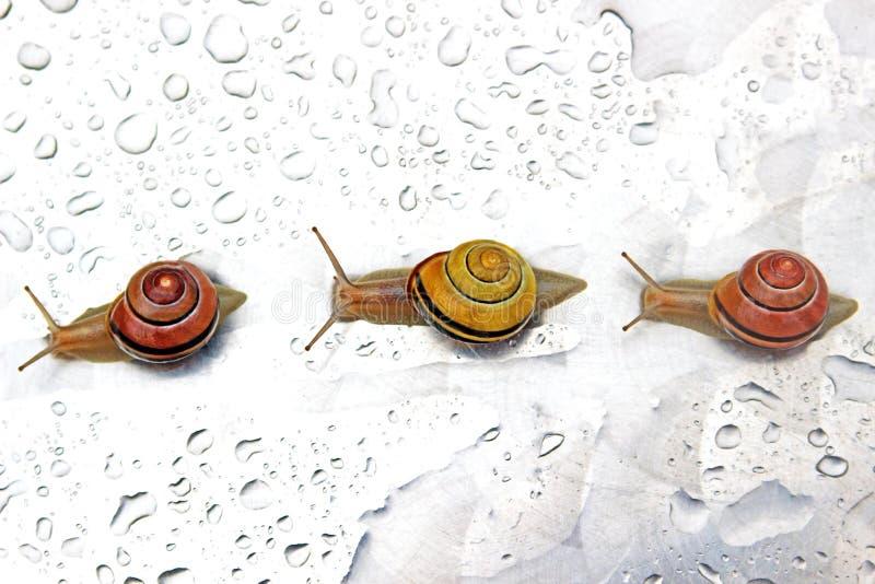 Tres caracoles en fila foto de archivo libre de regalías