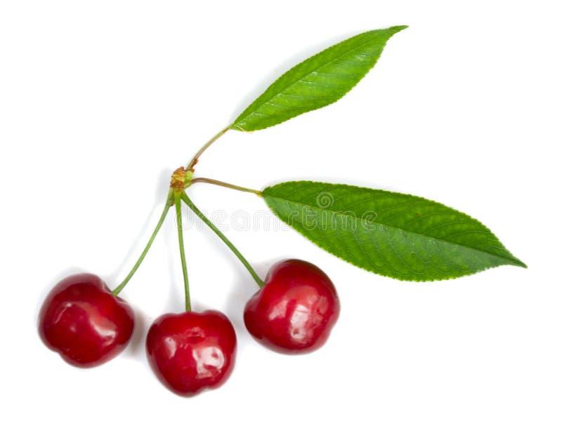 Tres cerezas maduras con las hojas fotografía de archivo libre de regalías