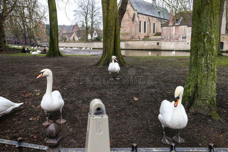 Tres cisnes blancos cristalinos en el fondo de tres árboles verdes foto de archivo libre de regalías