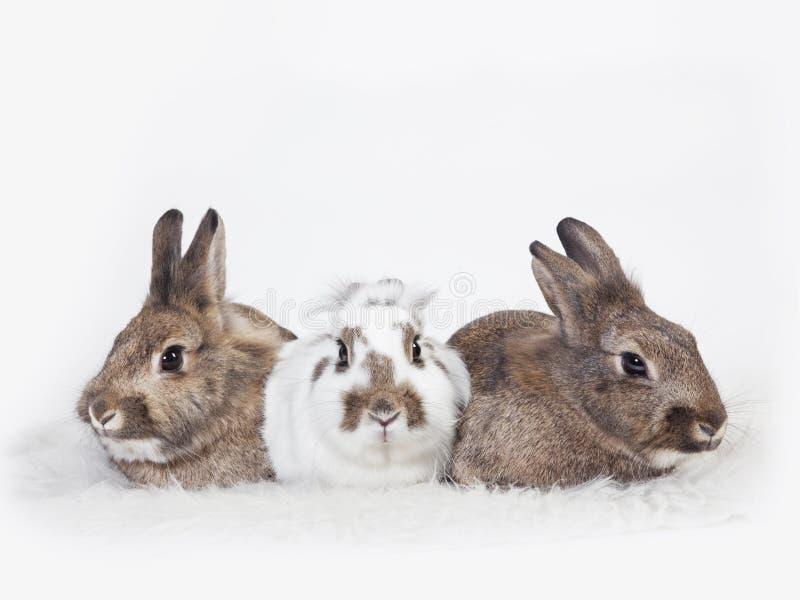 Tres conejos imagen de archivo
