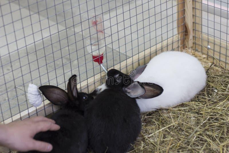 Tres conejos foto de archivo