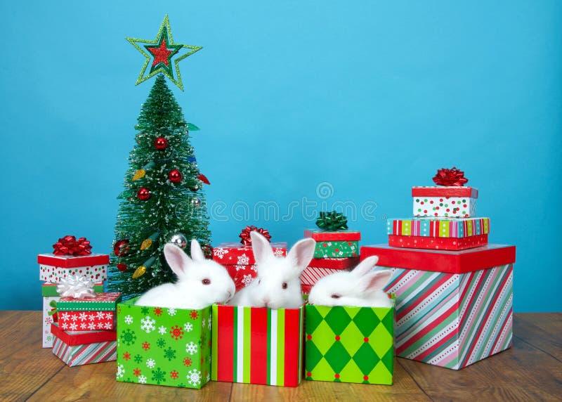 Tres conejos de conejito blancos del albino del bebé en cajas del regalo de Navidad foto de archivo libre de regalías