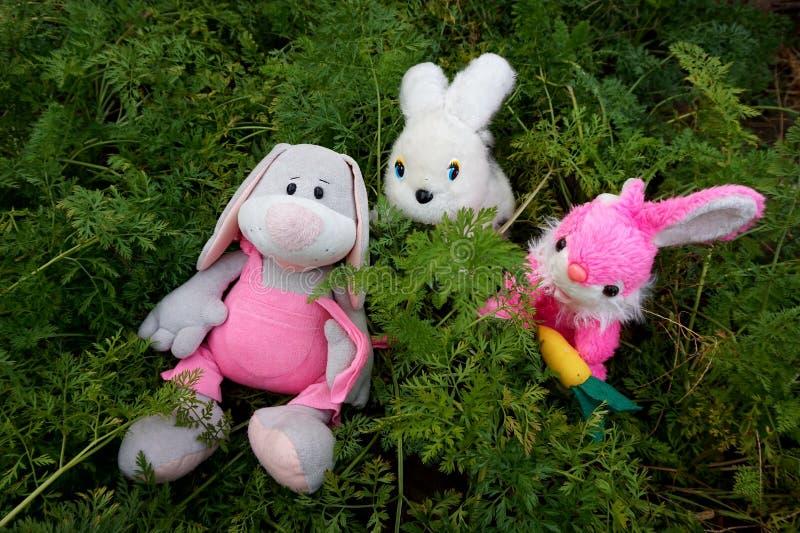 Tres conejos, juguetes suaves, encendido entre los tops de una zanahoria creciente imagen de archivo libre de regalías