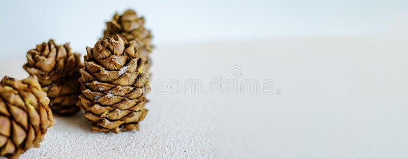 Tres conos del cedro cerca para arriba en un fondo blanco foto de archivo