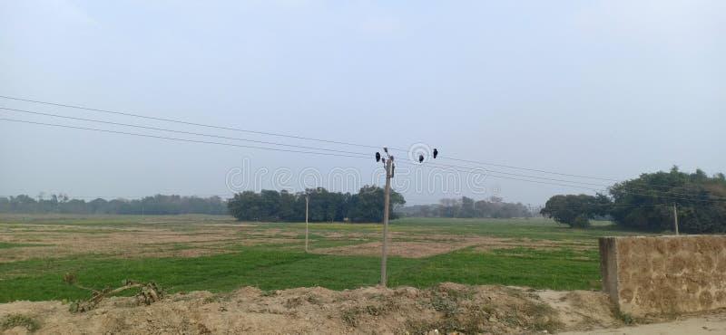 Tres cuervos sentados en extensiones eléctricas de alto voltaje en jhanjharpur madhubani bihar india fotos de archivo libres de regalías