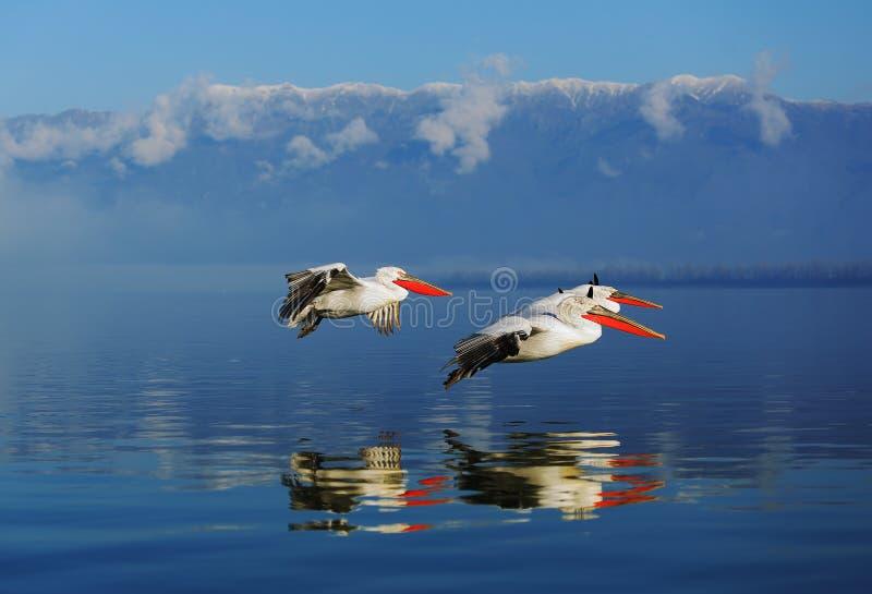 Tres fishermans que vuelan imágenes de archivo libres de regalías