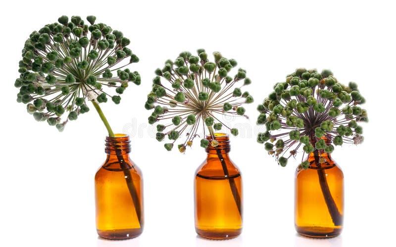 Tres flores de la cebolla en botellas en un fondo blanco Objetos aislados fotografía de archivo libre de regalías