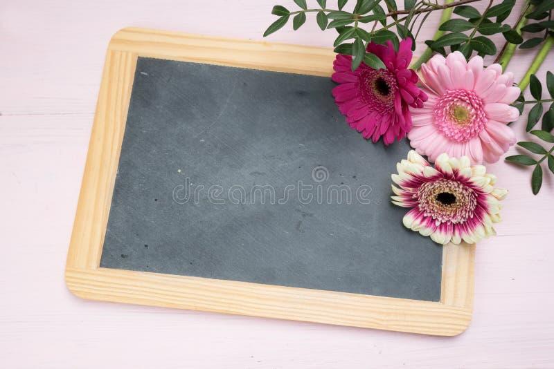 Tres flores del gerbera en rosa, rojo y blanco en un chalkb de la escritura imagen de archivo
