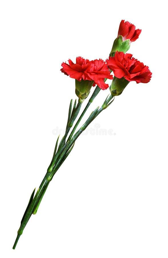 Tres flores rojas del clavel en un ramo foto de archivo libre de regalías